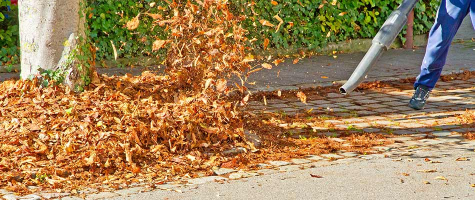 Leaf blower clearing leaves from a residential street in Ada, MI.